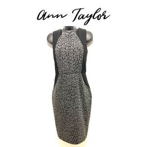 Ann Taylor contoured leopard Shift Dress
